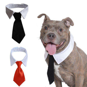 Cute Tie Collar for Pit Bull