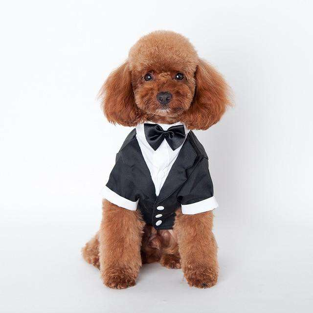 Cute Pet Tuxedo - Small to Medium Sized Dog