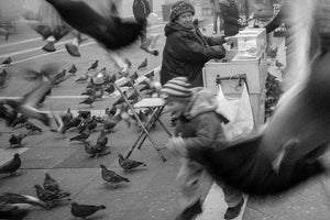 Pigeons in Piazza San Marco - to Rent