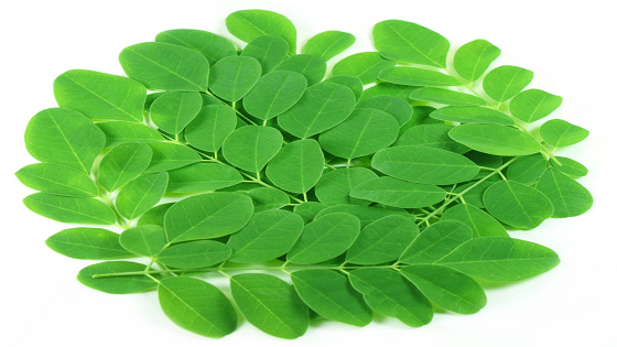 What are 10 Health Benefits of Consuming Moringa?