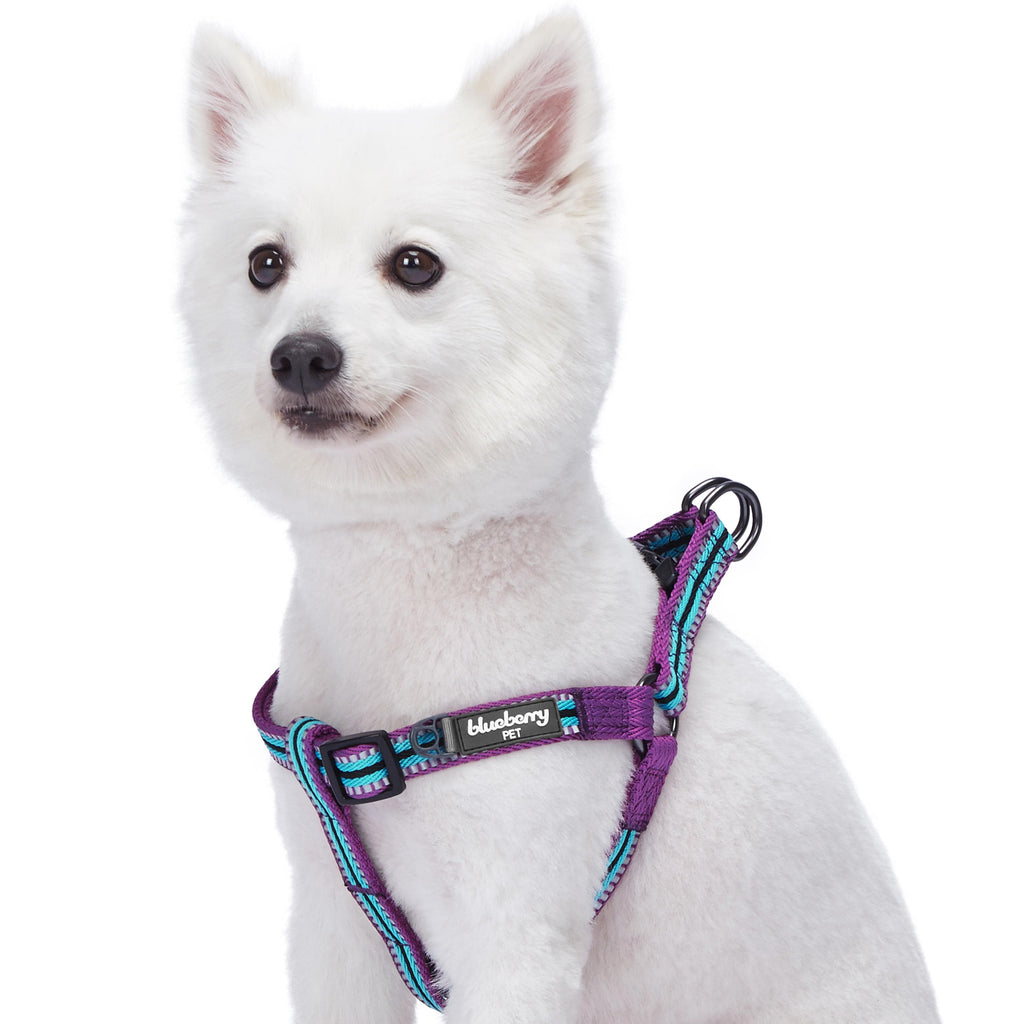 Dog Harness Blueberry Pet 3M Reflective Multi-colored Stripe Step-in Dog Harness Violet and Celeste / Small