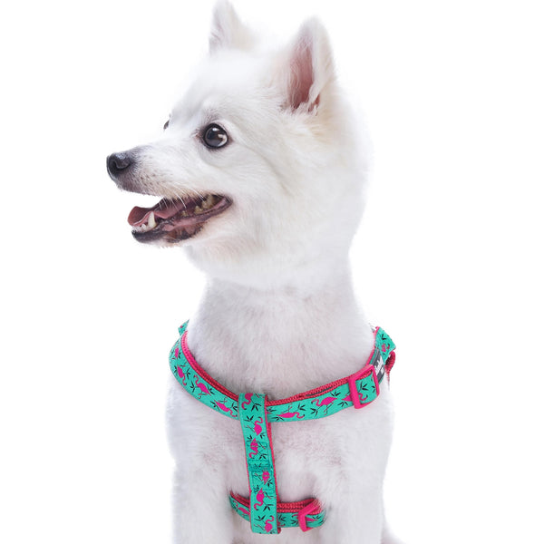 Dog Harness Essentials by Blueberry Pet Zoo Fun Dog Harness