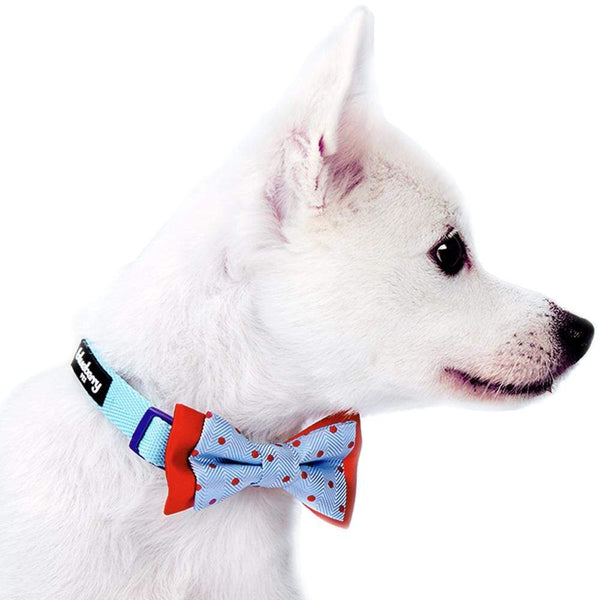 Dog Bowtie Blueberry Pet Stay Dotty Designer Bow Tie Set
