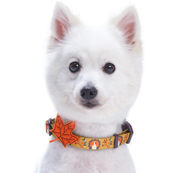 Dog Collar Blueberry Pet Thanksgiving Turkey Dog Collar