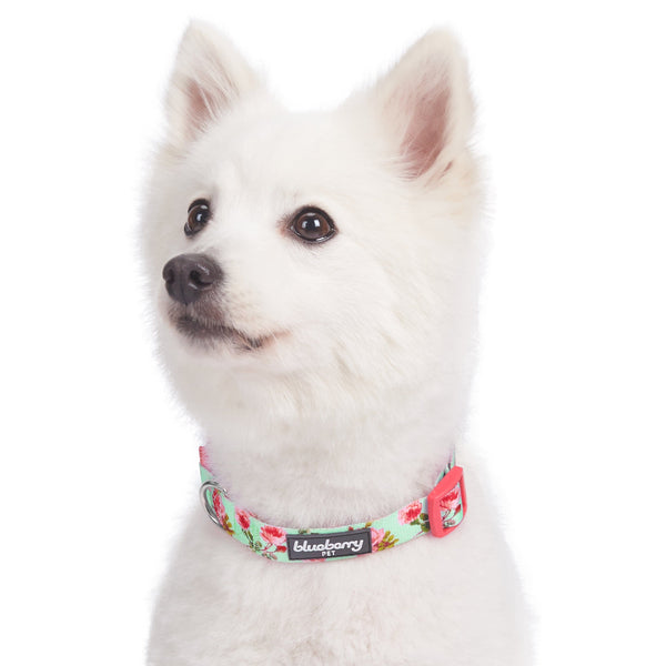 Dog Collar Blueberry Pet Spring Scent Inspired Floral Dog Collar