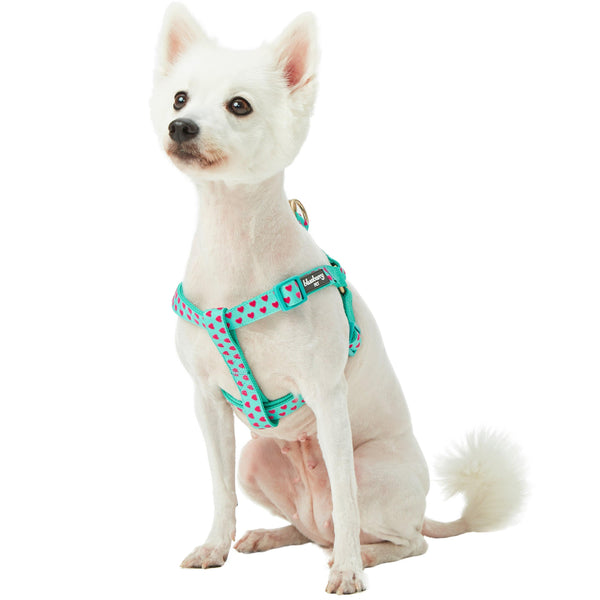 Dog Harness Blueberry Pet Heart Flocking Dog Harness