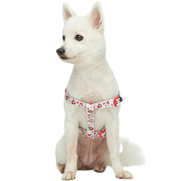 Dog Harness Blueberry Pet Cherry Garden Dog Harness