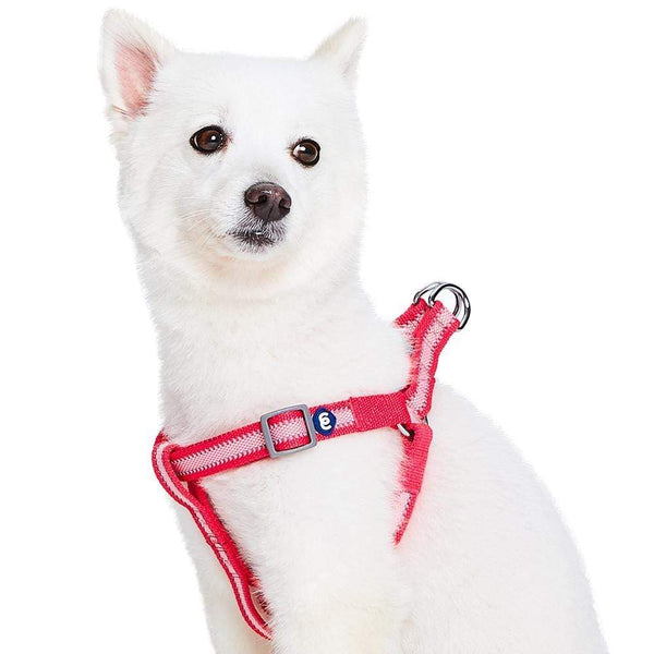 Dog Harness Essentials by Blueberry Pet Back to Basics Safe Reflective Dog Harness