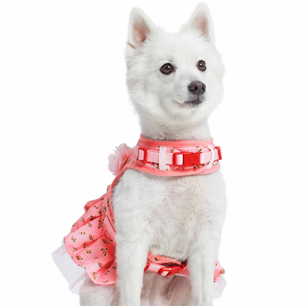 Dog Harness Blueberry Pet Spring Scent Inspired Floral Dog Harness Dress
