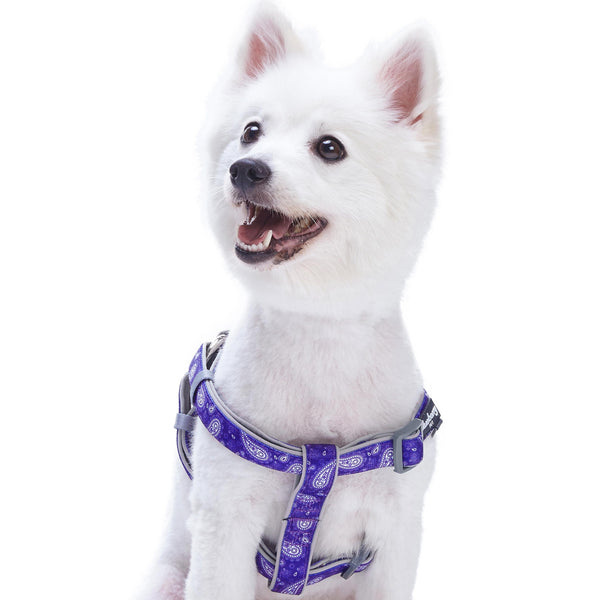 Dog Harness Blueberry Pet Paisley Print Padded Dog Harness
