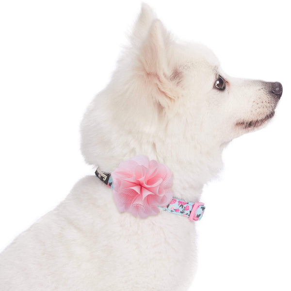 Dog Collar Blueberry Pet Made Well Dog Collar with Flower