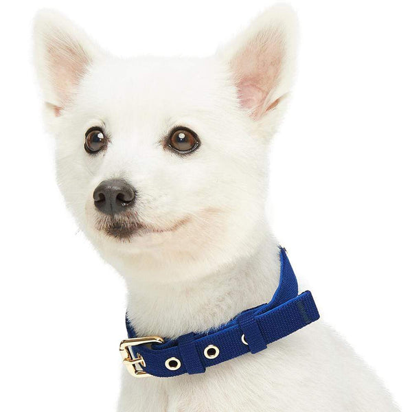 Dog Collar Blueberry Pet Modern Iconic Padded Dog Collar