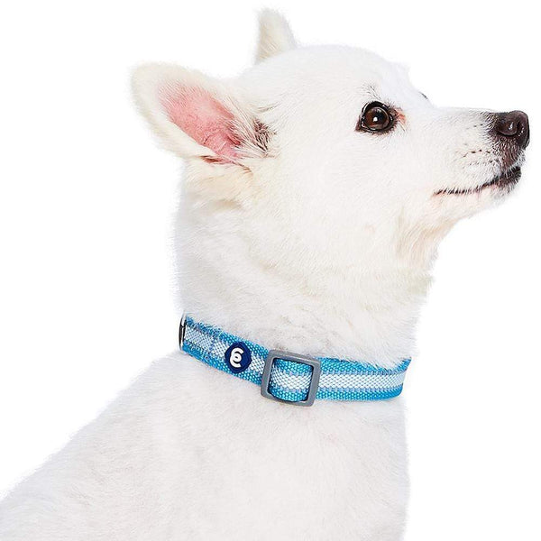 Dog Collar Essentials by Blueberry Pet Back to Basics Reflective Dog Collar