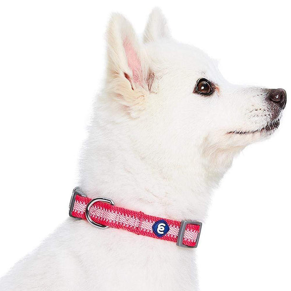 Dog Collar Essentials by Blueberry Pet Back to Basics Safe Reflective Dog Collar