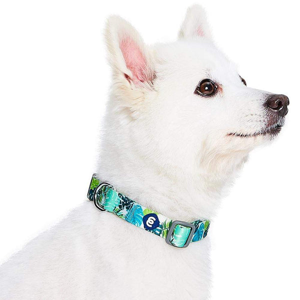 Dog Collar Essentials by Blueberry Pet Bahamas Vacation Dog Collar
