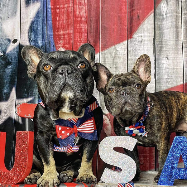 Dog Accessory Blueberry Pet Patriotic Spirit American Flag Pet Accessory Set