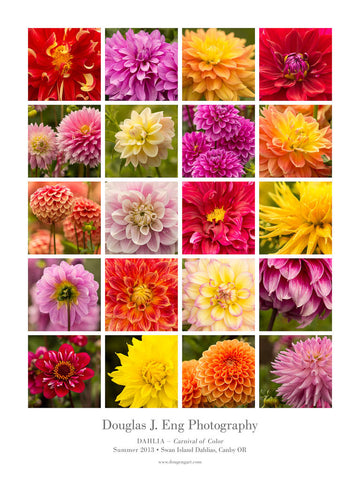 Dahlia - Carnival of Color