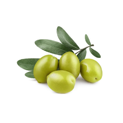 Olive Fruit Extract