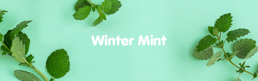 Winter Mint Everyday Lotion