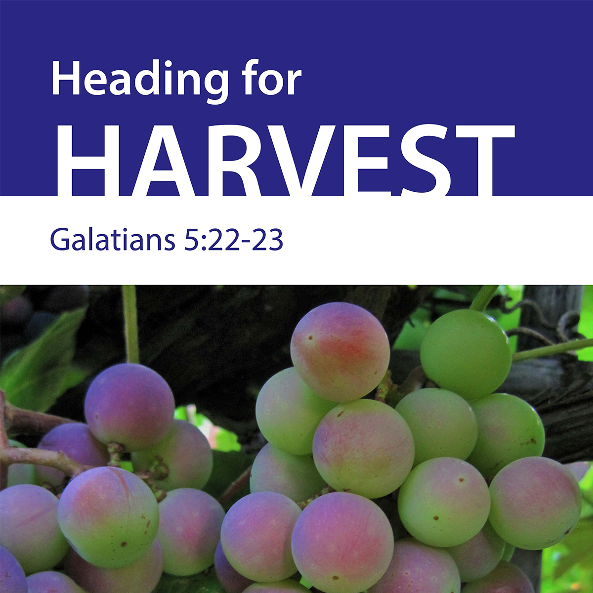 Heading for Harvest - New Release!