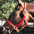 World of Horses Halter