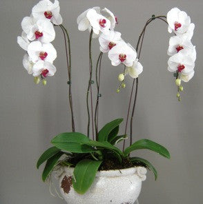 Orchid Ceramic/Glass Design