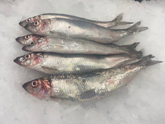 Local Longshore Herring (6)