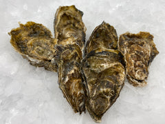 Brancaster Oysters