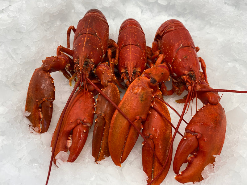 Norfolk Lobster (whole)