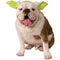 Yoda Pet Headpiece - kostumed