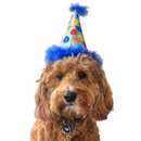 Blue Party Time Cone Pet Hat - Huxley & Kent - kostumed