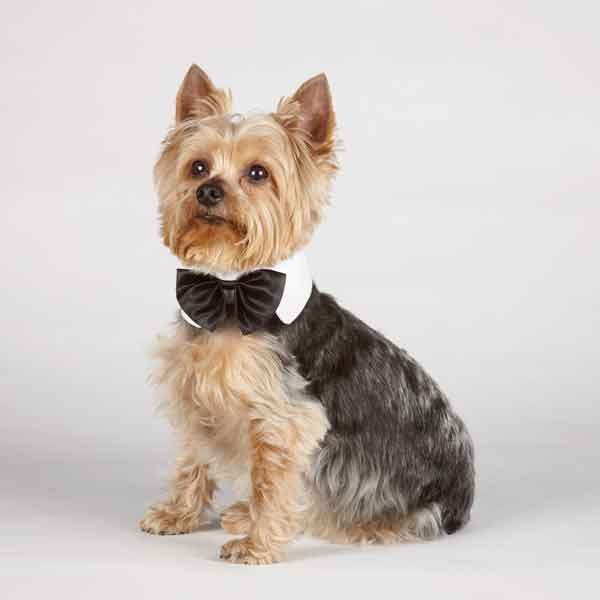 Canine Royal Black Pet Bowtie - kostumed