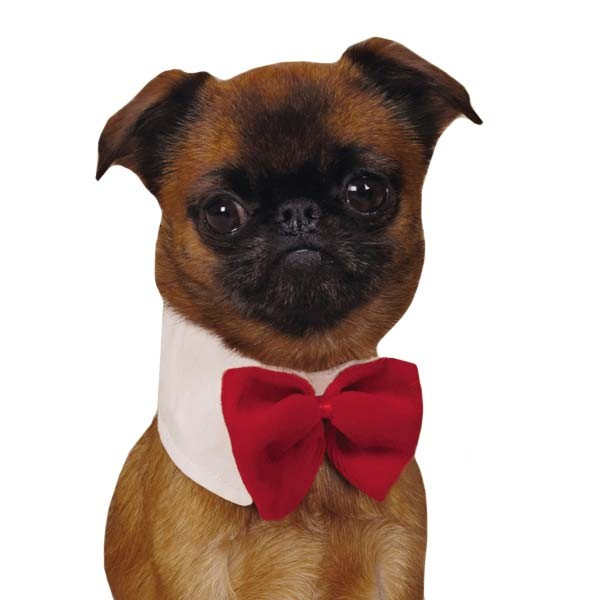 Canine Royal Red Pet Bowtie - kostumed