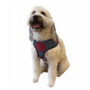 Captain America Marvel Dog Harness - kostumed