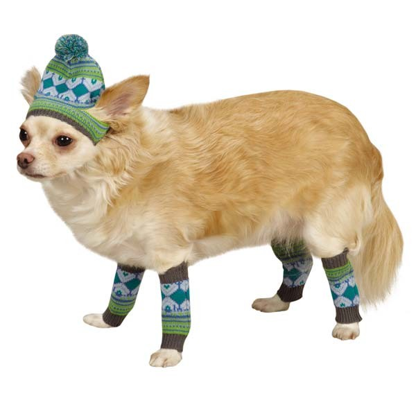 Pet Hat & Leg Warmers - Blue & Green - kostumed