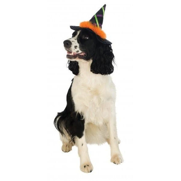 Witch Pet Hat With Orange Trim - kostumed