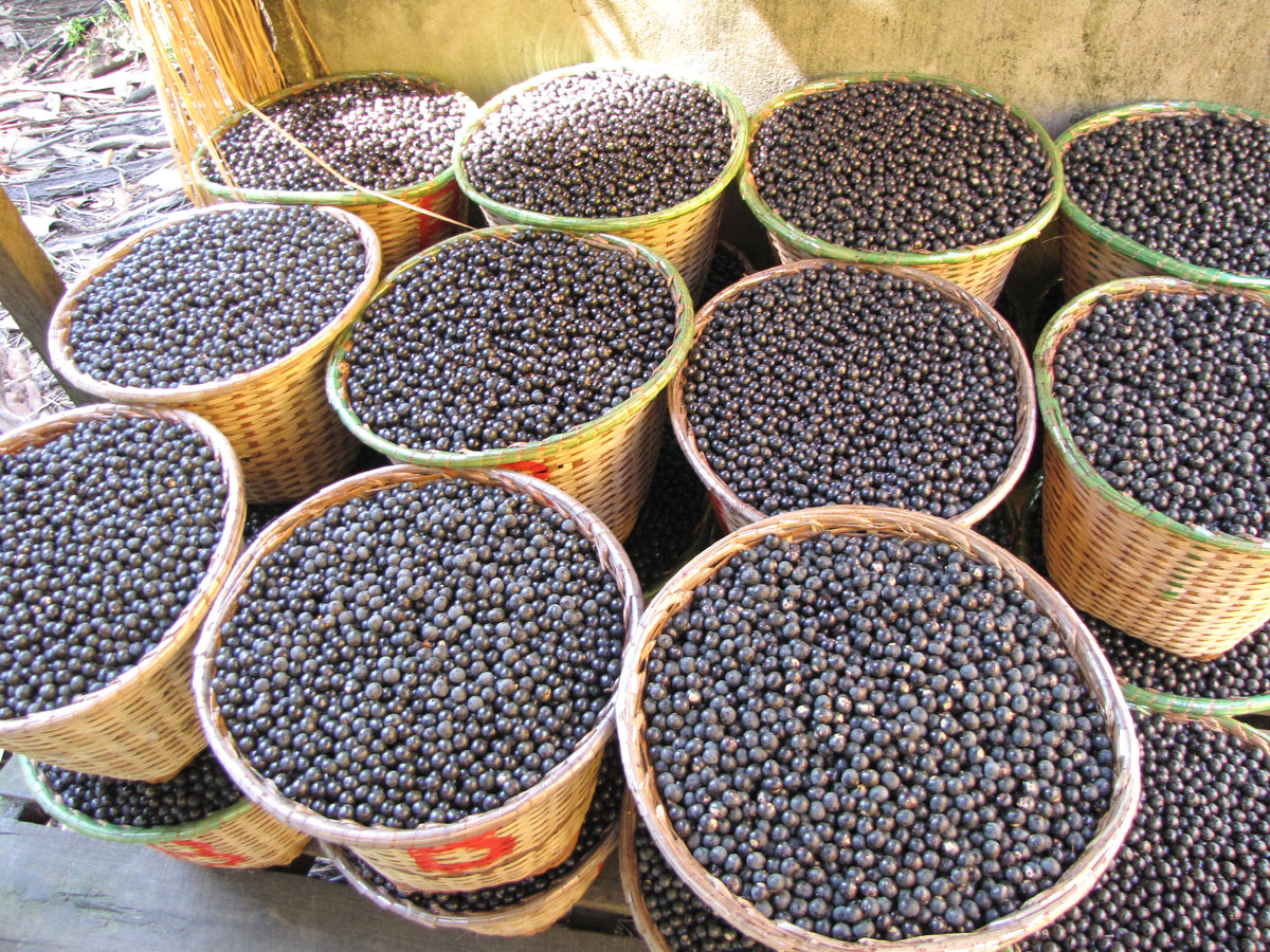Acai: The Original Superfruit