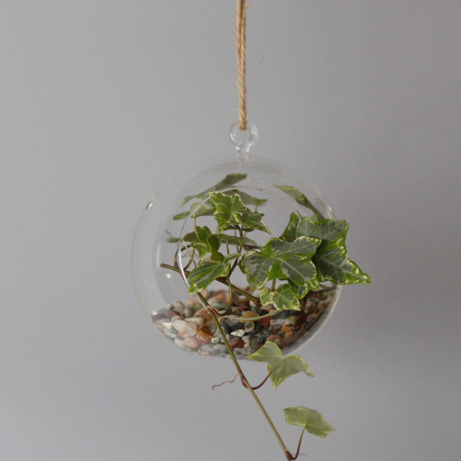 Globe Hanging Bowl All Glass Terrarium - Gift2U.co.uk - Unique gifts online to You