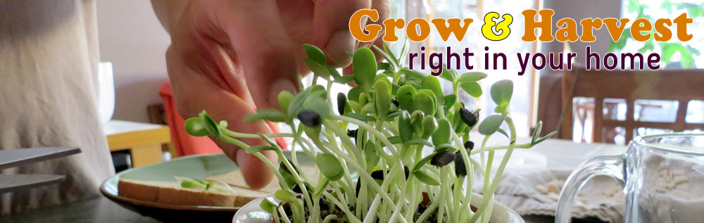 Grow Your Own Sprouts Right At Home
