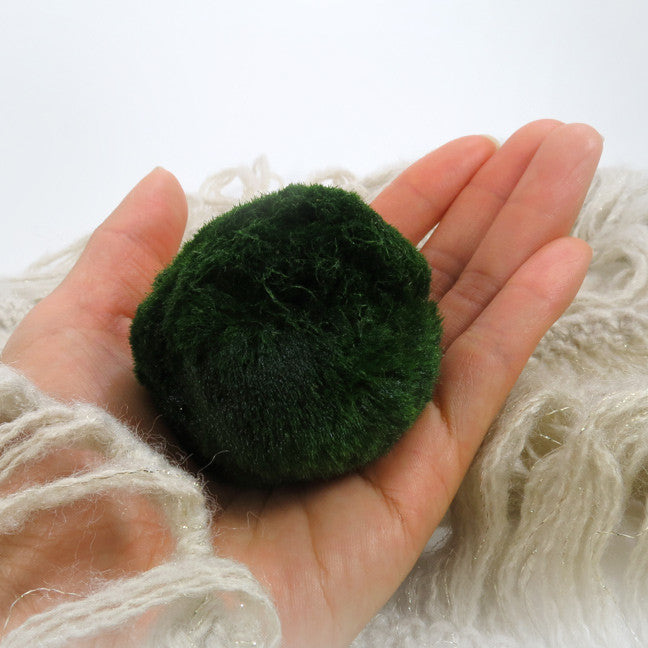 XL Marimo For Your Own Aquarium