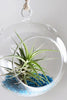 Air Plant in the Shimmering Dome (Blue)