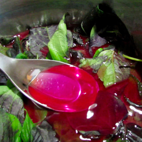 Magenta Leaf Plant AKA Lá Cẩm -- Natural Food Coloring!