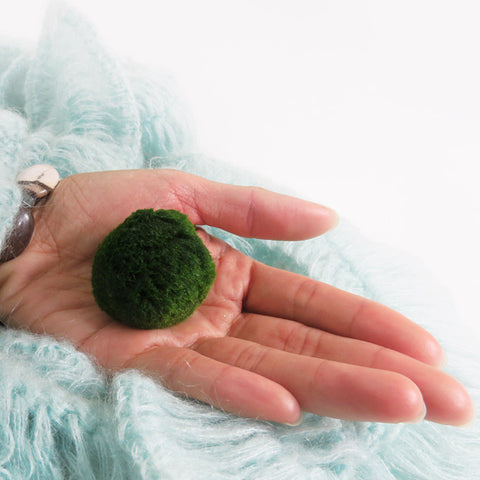 Large Marimo For Your Own Aquarium