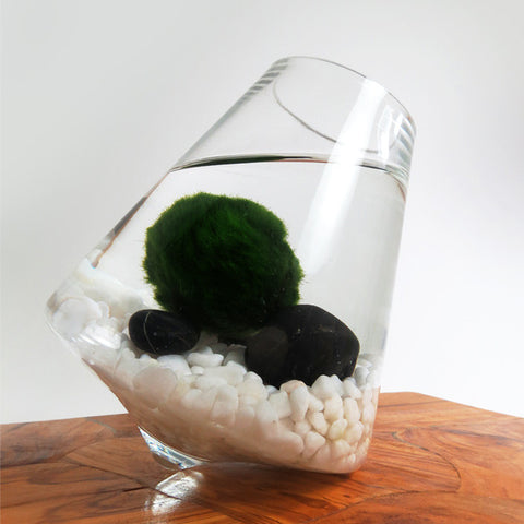 Marimo in the Rocking Playground -- Discounted!