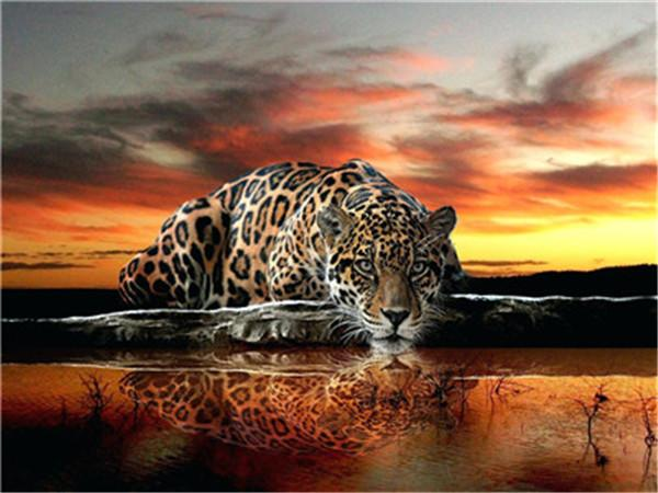 Animal Leopard Paint By Numbers Kits UK For Adult Y5403