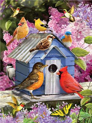 Bird Paint By Numbers Kits UK For Adult Y5528