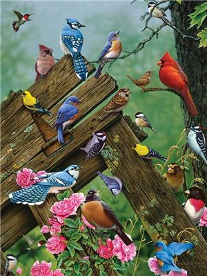 Bird Paint By Numbers Kits UK For Adult Y5782