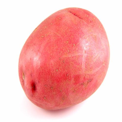 Baby Red Potato by LBS