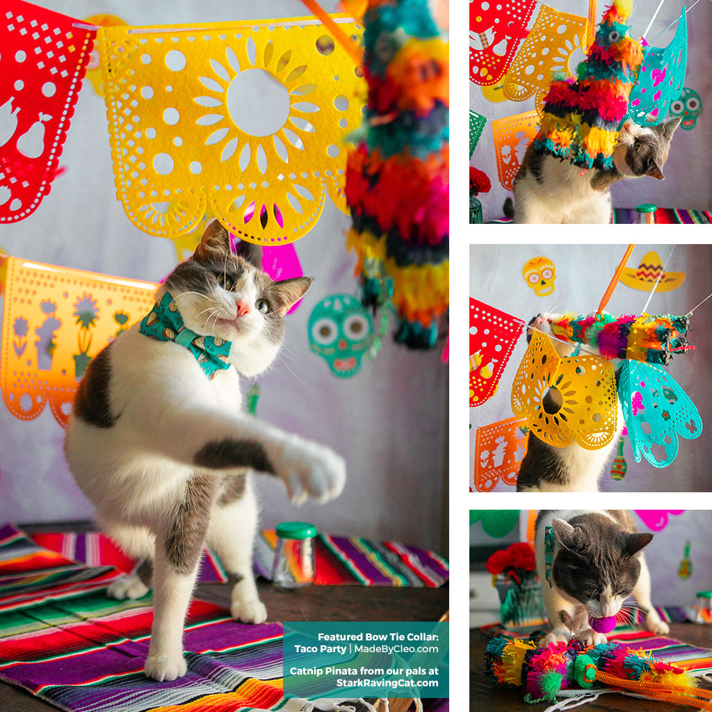 Cinco de Mayo - Taco Cat Bow Tie Collar from Made By Cleo