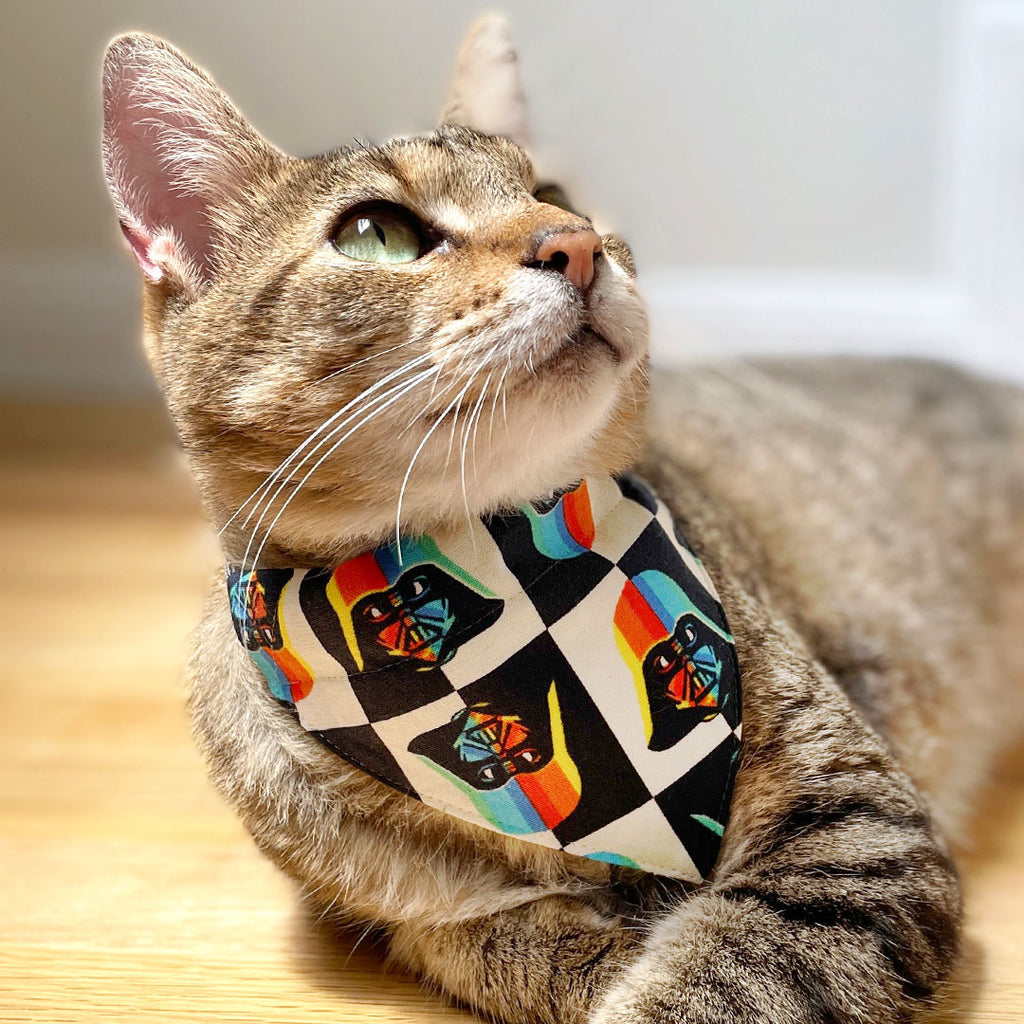 Cat Bandanas for Every Personality - Shop from 200+ Styles